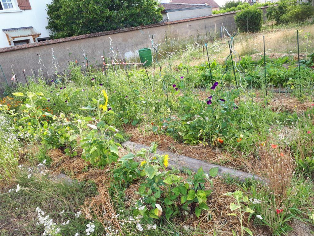 Les plantes permettent de capter et stocker l'énergie du soleil