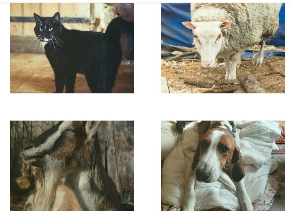Les animaux de la Cour des Aulnays