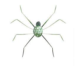 le talent naturel araignée de blooming companies