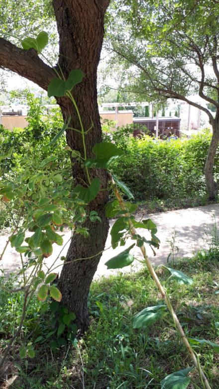 Le jardin antique méditerranéen