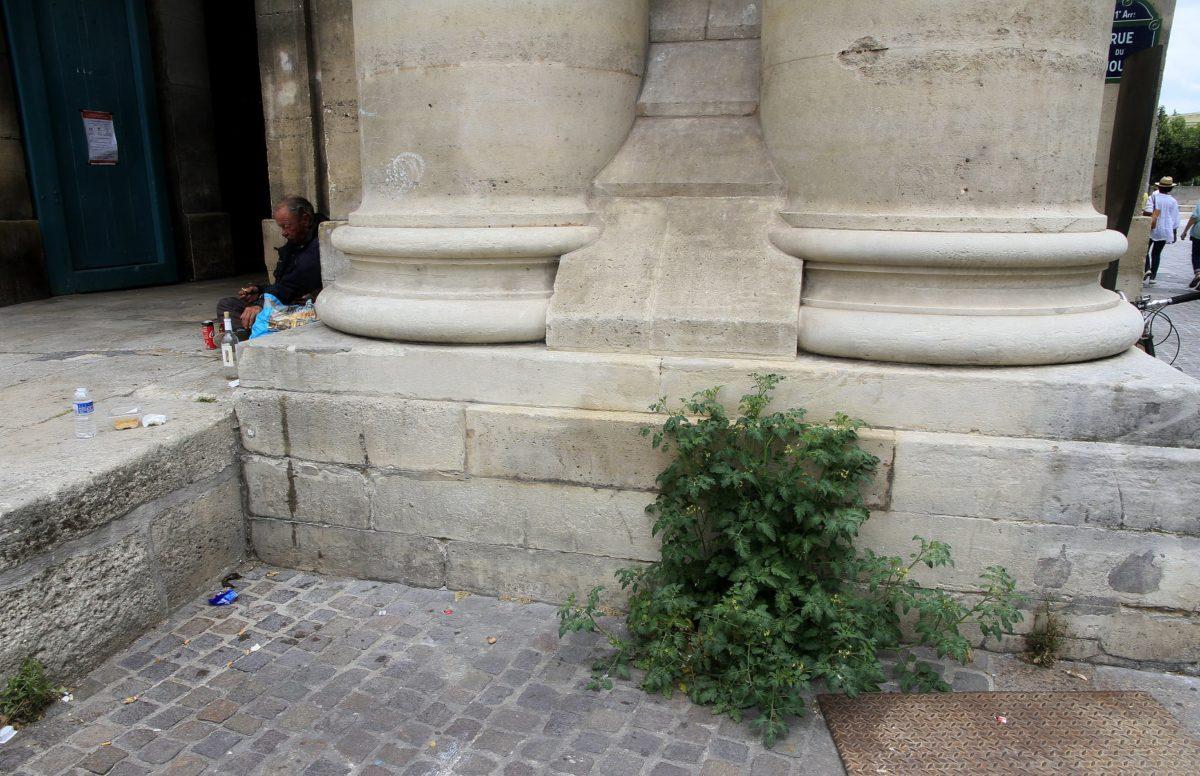 Pied de tomate devant l'Eglise St-Eustache - Eric Lenoir