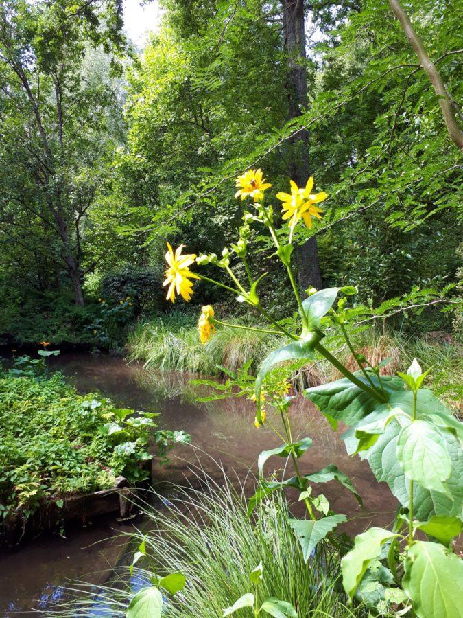 Le jardin arboretum d'Ilex