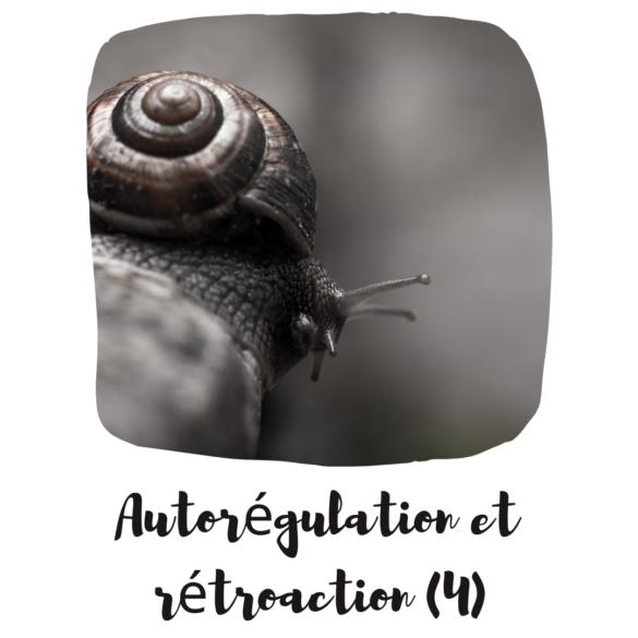 Autorégulation et rétroaction : principe 4