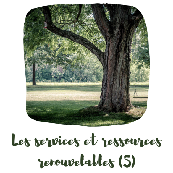 Les services et les ressources renouvelables : principe 5